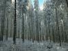 Langlaufen im Waldviertel - Region Bärnkopf